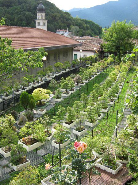 Per gli amanti del bonsai........ Immagi37