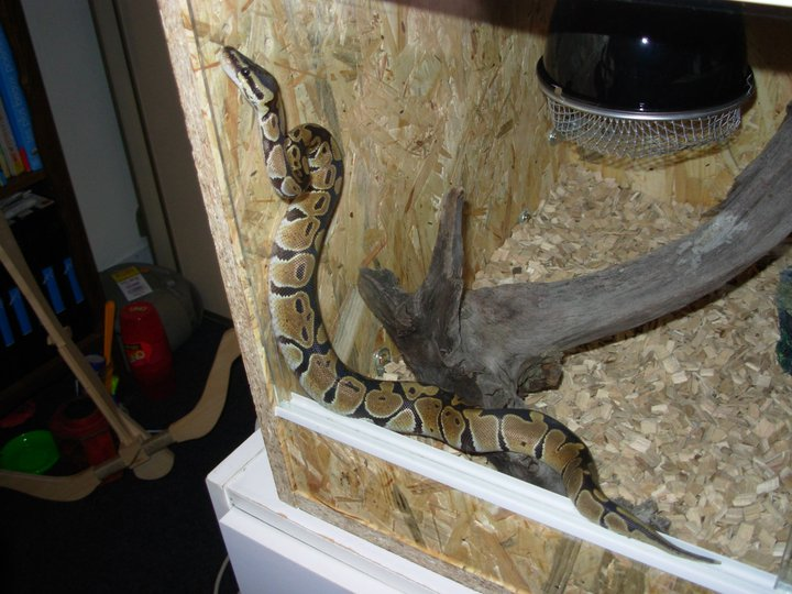 dernier arrivant à la maison Python11