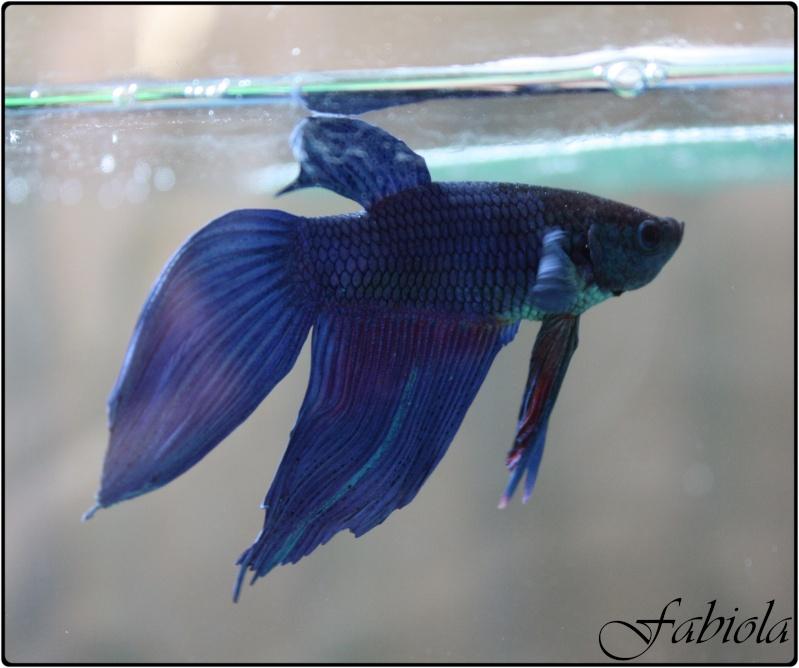 Problème nageoire & betta qui tombe au fond de l'aquarium Img_0010