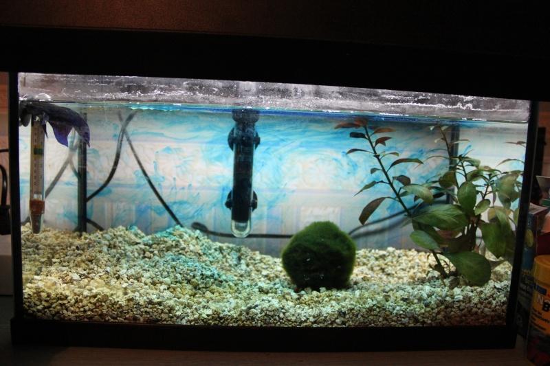 Problème nageoire & betta qui tombe au fond de l'aquarium Img_8210