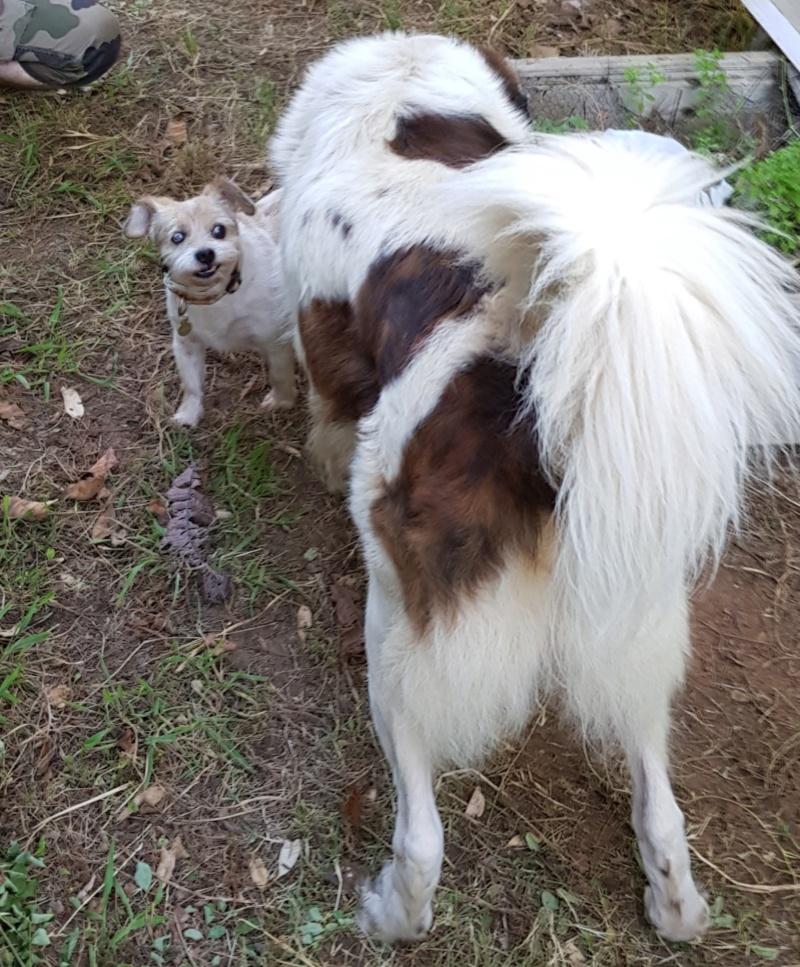 CHESTER- mâle croisé petite taille âgé né env 2007 (Moinesti)- en FALD chez sylvie11 (dpt31) - Page 13 20180619