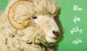 عيدكم مبارك - دليلك الامثل لشراء خروف العيد 1_112310