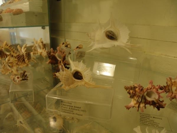Musée du coquillage de Raiatea - Page 3 Photo_25