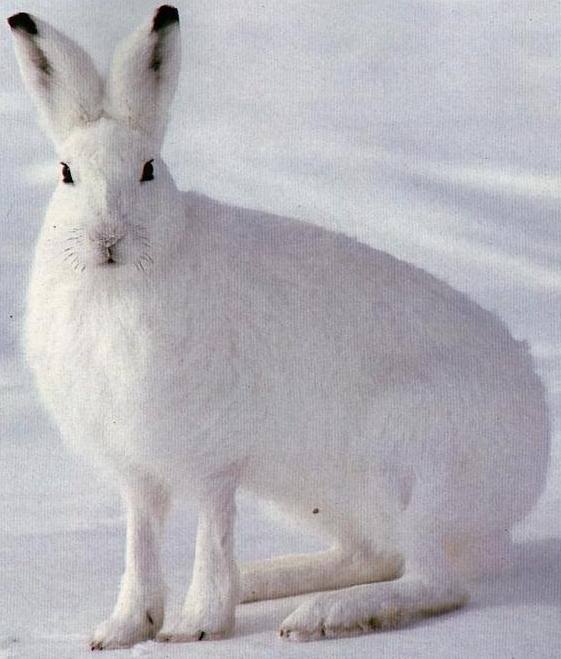 Готовим зайца 110