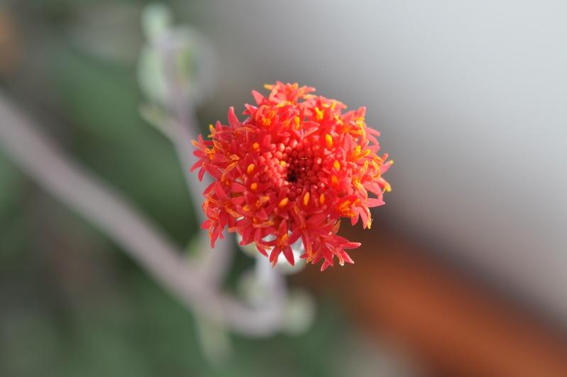 floraisons de chez Xata - Page 2 00112