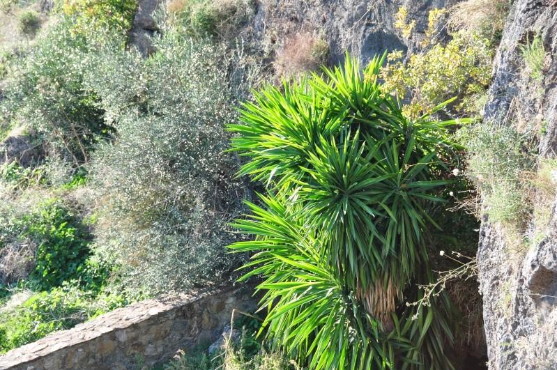 Al-Andalus (Andalousie - Algarve - Alentejo),  faune,  flore, paysages, maisons  et jardins fleuris - Page 2 01511