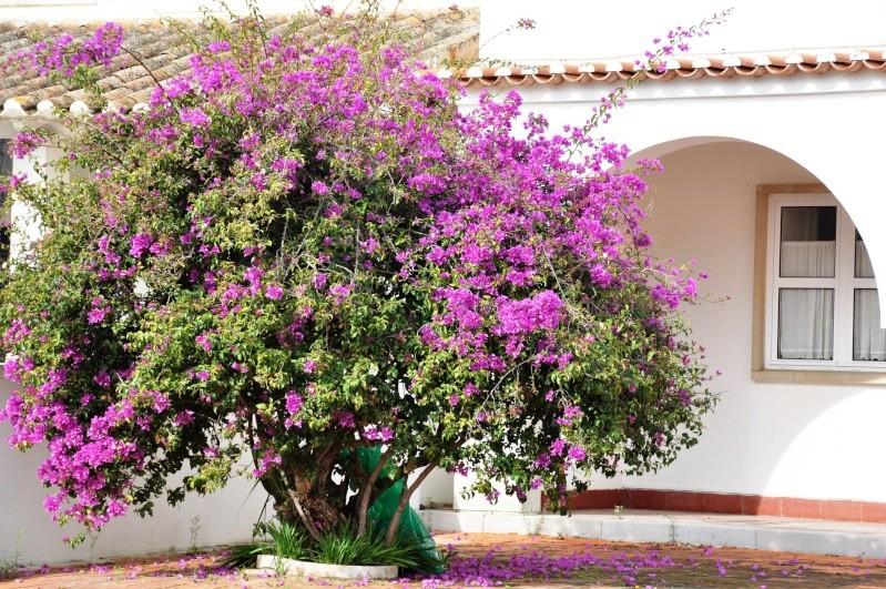 Al-Andalus (Andalousie - Algarve - Alentejo),  faune,  flore, paysages, maisons  et jardins fleuris - Page 2 01911