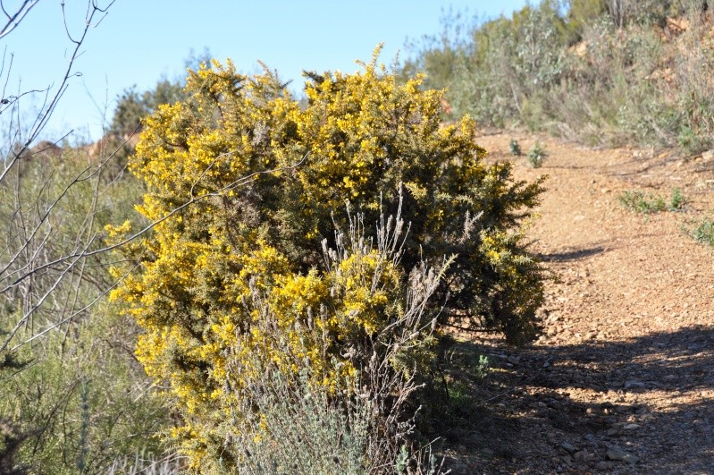 Al-Andalus (Andalousie - Algarve - Alentejo),  faune,  flore, paysages, maisons  et jardins fleuris - Page 2 02012