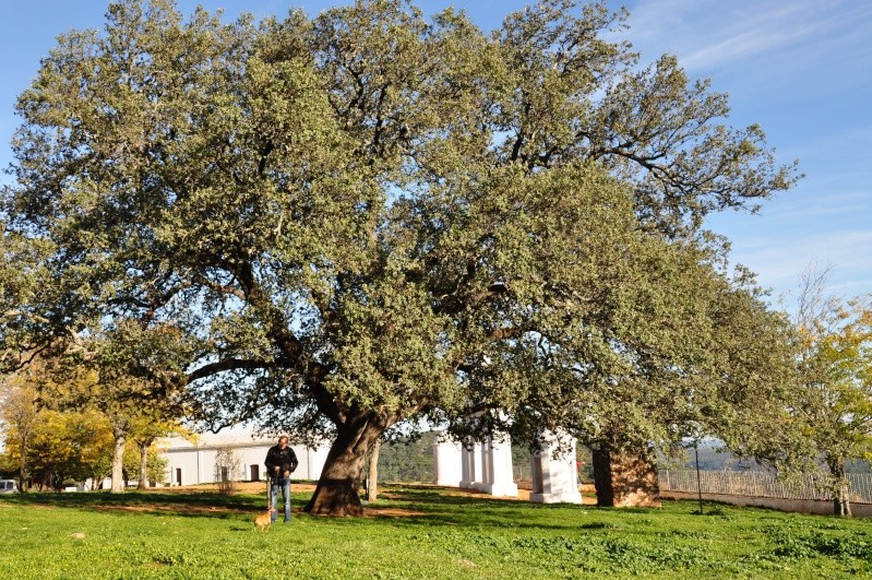 Al-Andalus (Andalousie - Algarve - Alentejo),  faune,  flore, paysages, maisons  et jardins fleuris - Page 2 02311