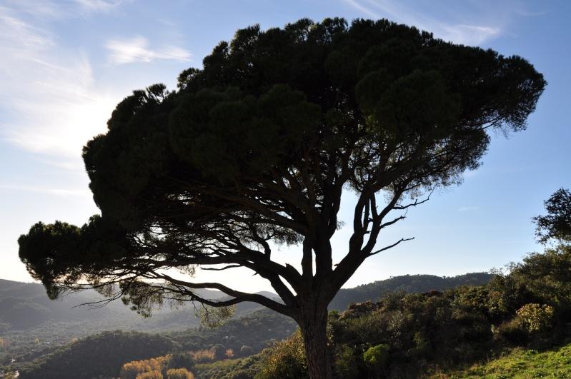 Al-Andalus (Andalousie - Algarve - Alentejo),  faune,  flore, paysages, maisons  et jardins fleuris - Page 2 02410