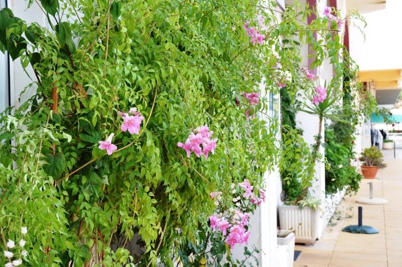Al-Andalus (Andalousie - Algarve - Alentejo),  faune,  flore, paysages, maisons  et jardins fleuris - Page 2 02411