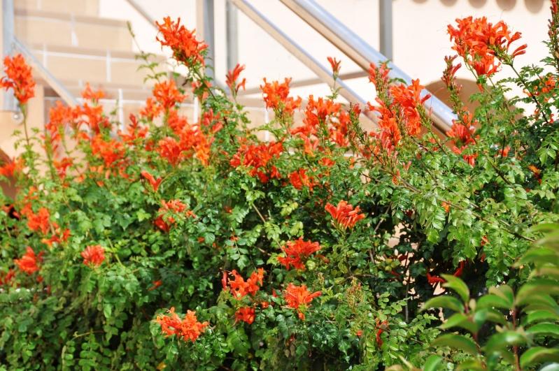 Al-Andalus (Andalousie - Algarve - Alentejo),  faune,  flore, paysages, maisons  et jardins fleuris - Page 2 02510