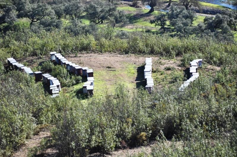 Al-Andalus (Andalousie - Algarve - Alentejo),  faune,  flore, paysages, maisons  et jardins fleuris - Page 2 02610