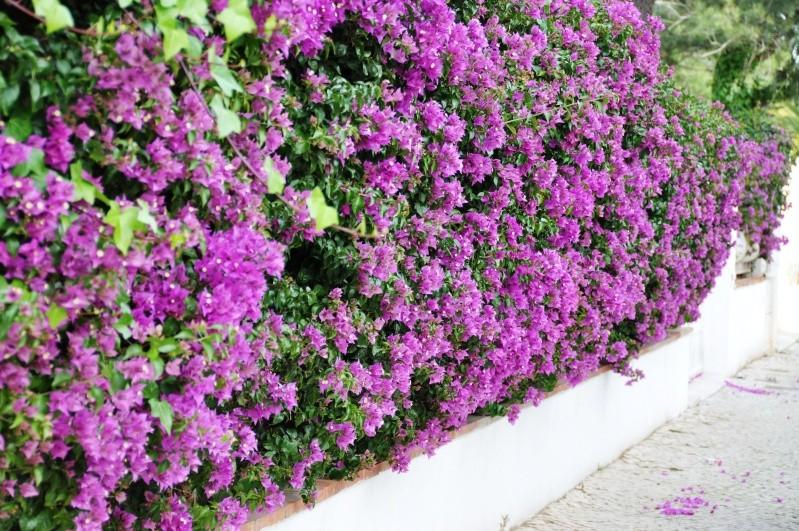 Al-Andalus (Andalousie - Algarve - Alentejo),  faune,  flore, paysages, maisons  et jardins fleuris - Page 2 02710