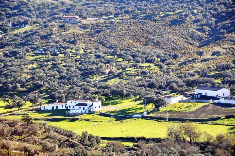 Al-Andalus (Andalousie - Algarve - Alentejo),  faune,  flore, paysages, maisons  et jardins fleuris - Page 2 02711