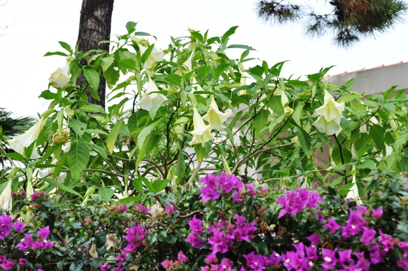 Al-Andalus (Andalousie - Algarve - Alentejo),  faune,  flore, paysages, maisons  et jardins fleuris - Page 2 02811