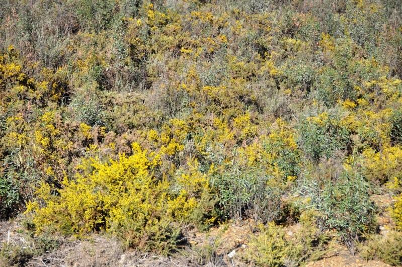 Al-Andalus (Andalousie - Algarve - Alentejo),  faune,  flore, paysages, maisons  et jardins fleuris - Page 2 03910