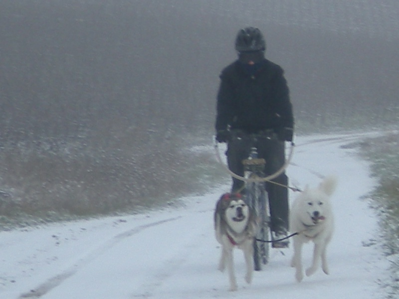 Deïko et Eÿden dans la neige  Photo_10