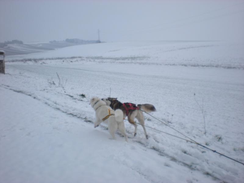 Deïko et Eÿden dans la neige  Photo_12