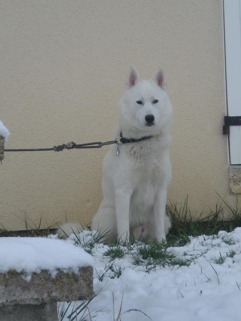 Deïko et Eÿden dans la neige  Photo_13