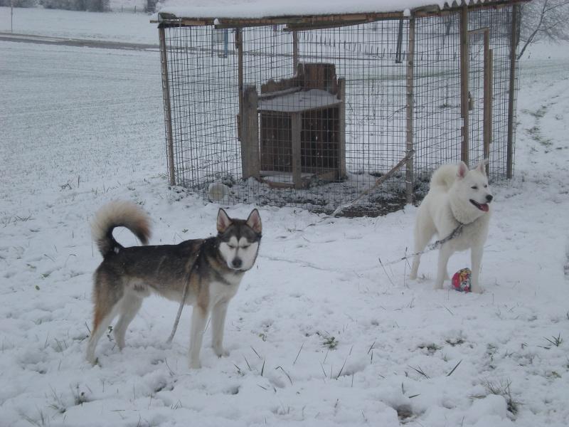 Deïko et Eÿden dans la neige  Photo_15