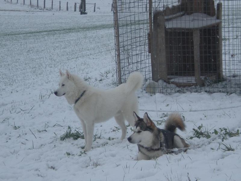 Deïko et Eÿden dans la neige  Photo_16