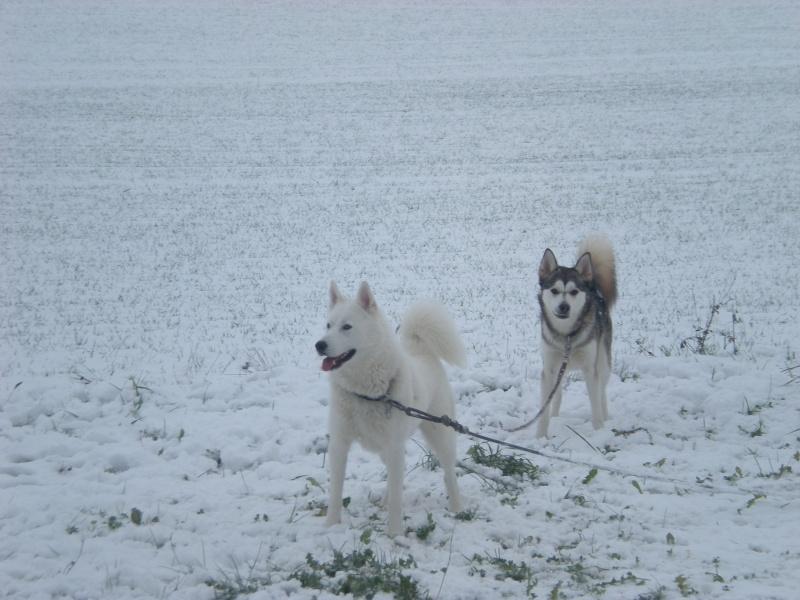 Deïko et Eÿden dans la neige  Photo_18