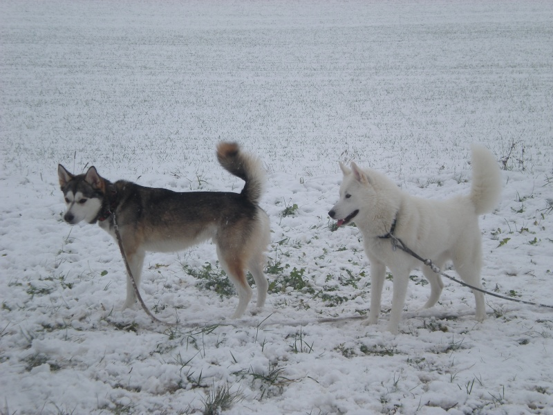 Deïko et Eÿden dans la neige  Photo_21