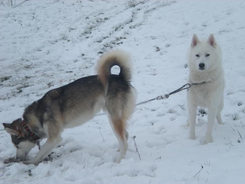 Deïko et Eÿden dans la neige  Photo_27
