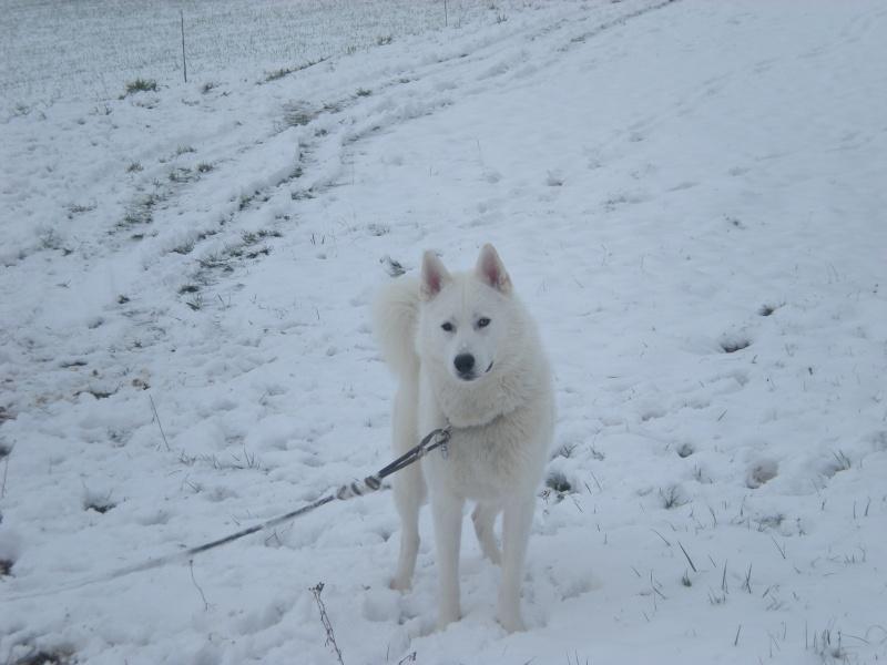 Deïko et Eÿden dans la neige  Photo_28