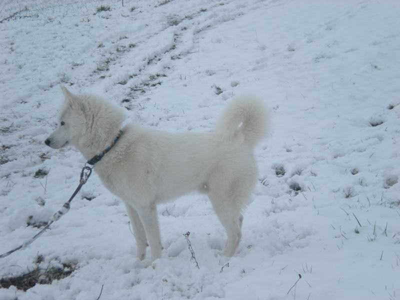 Deïko et Eÿden dans la neige  Photo_30