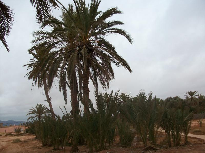 En route vers le sahara, avec ma Mercedes!  100_3310