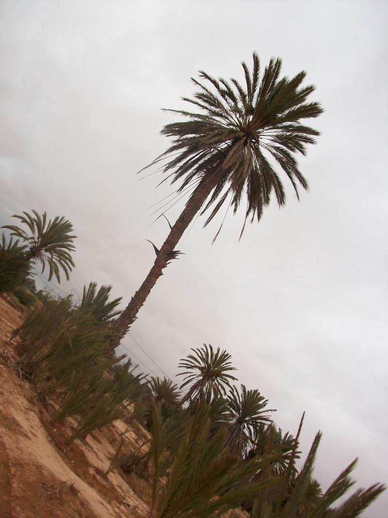 En route vers le sahara, avec ma Mercedes!  100_3312