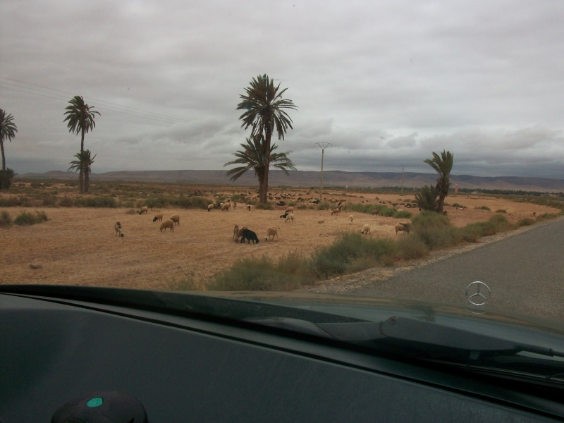En route vers le sahara, avec ma Mercedes!  100_3336