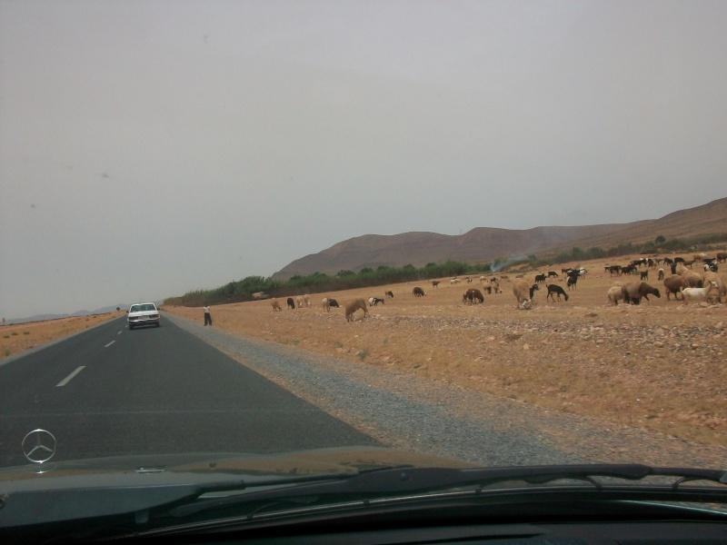 En route vers le sahara, avec ma Mercedes!  100_3429