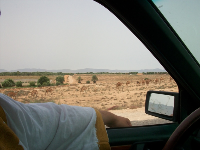 En route vers le sahara, avec ma Mercedes!  100_3525