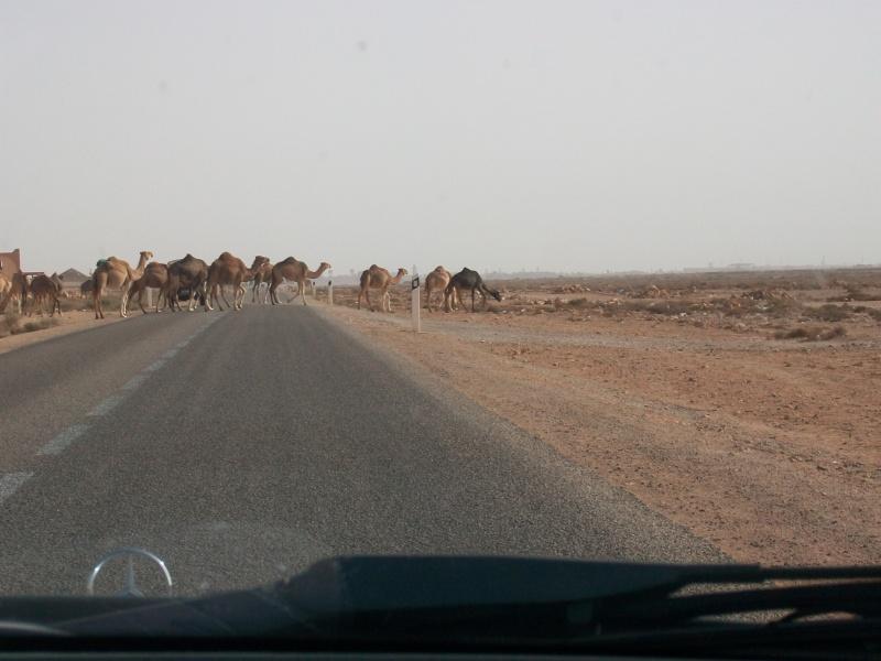 En route vers le sahara, avec ma Mercedes!  - Page 3 Img90810