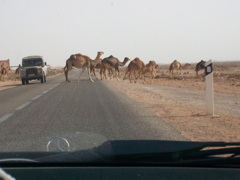 En route vers le sahara, avec ma Mercedes!  - Page 3 Img90910