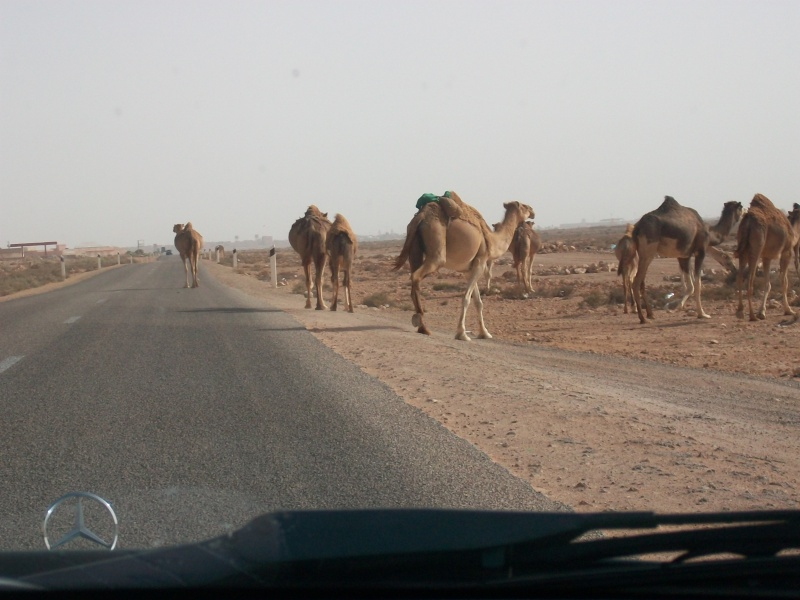 En route vers le sahara, avec ma Mercedes!  - Page 3 Img91010