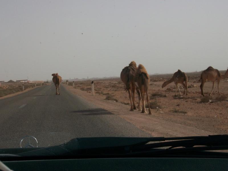En route vers le sahara, avec ma Mercedes!  - Page 3 Img91110