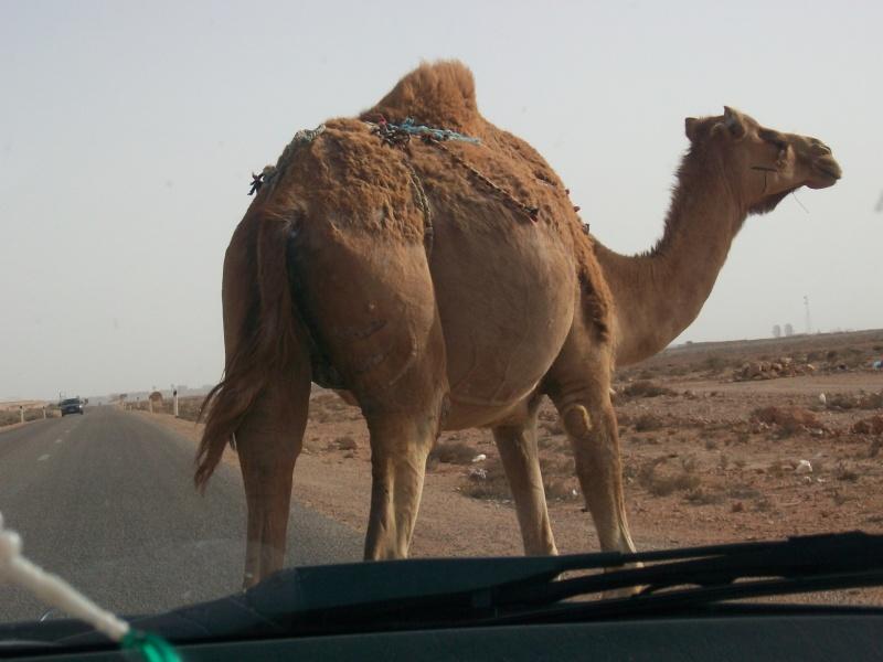 En route vers le sahara, avec ma Mercedes!  - Page 3 Img91210