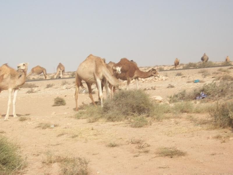 En route vers le sahara, avec ma Mercedes!  - Page 3 Img91310