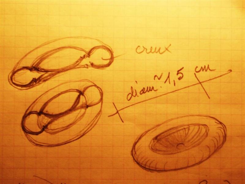 rondelle bizarre à identifier dans grès de 29560 Landevennec Pb060012