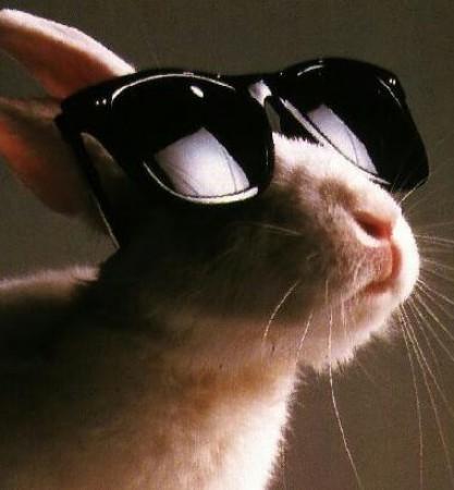 Coins de photos amusantes AUTRES que chiens et chats, n'hésitez pas à en rajouter Big_9210