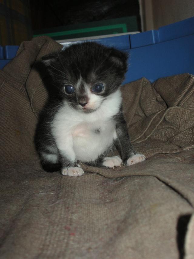 Spécials Photos : Avant/Après de nos chats - Page 5 Juin_210