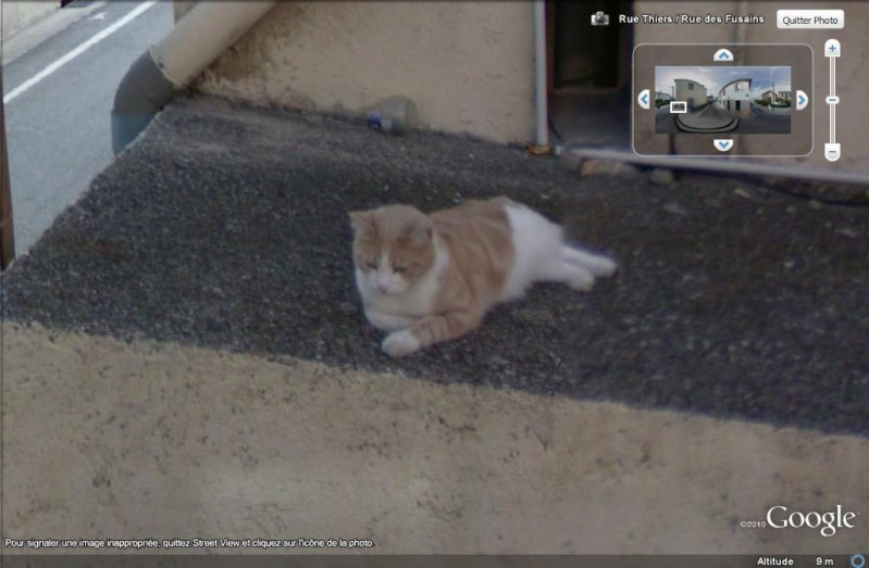 STREET VIEW : Les animaux - Page 5 Chat10