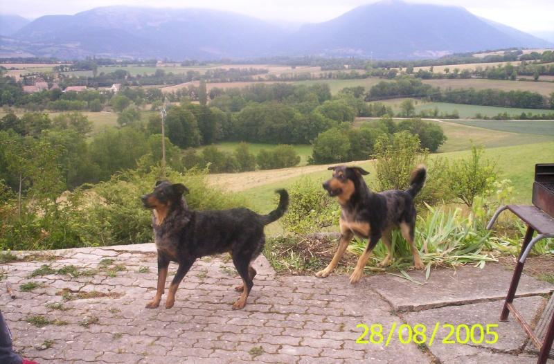 """Et pour les chiens çà marche aussi ? (Avril : """"Quand ils prennent la pose"""") - Page 3 100_0210"""