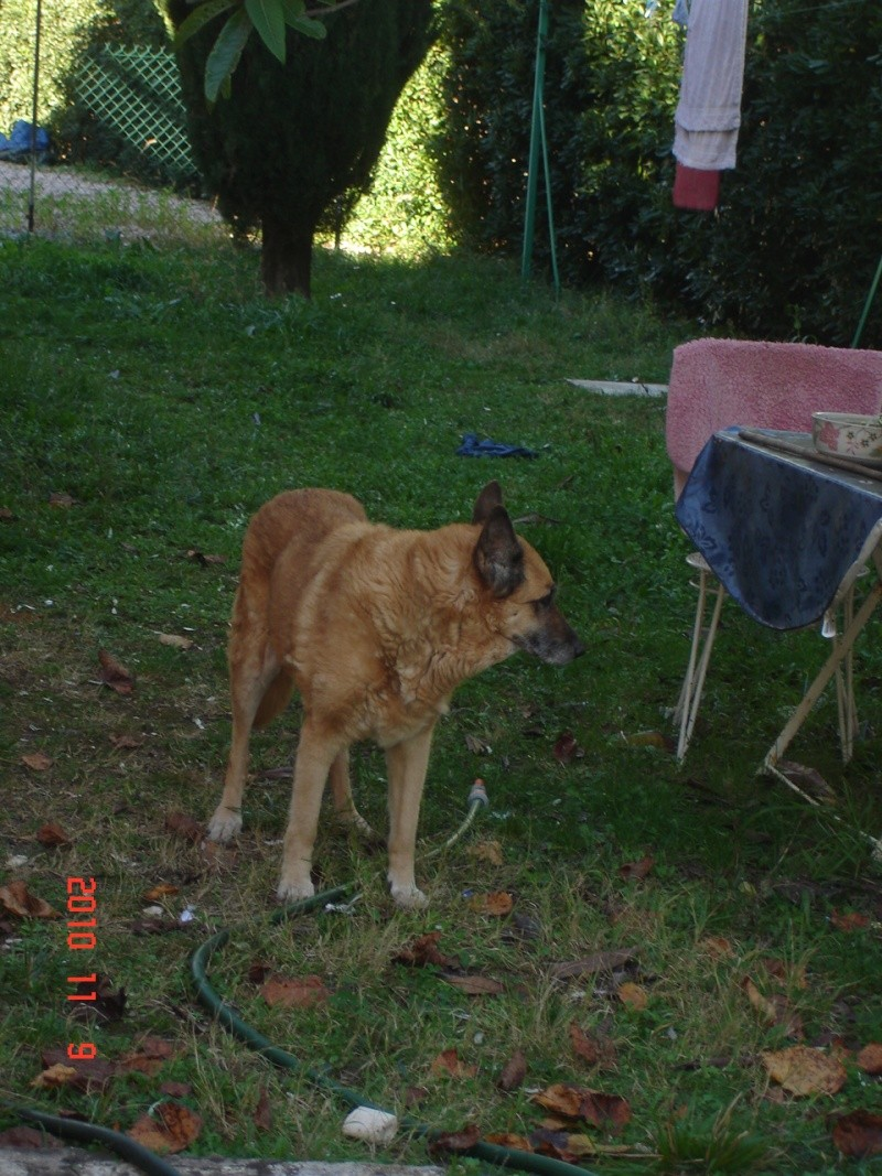 camille berger belge malinois parrainage Camill10