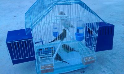 Ma cage Photo010