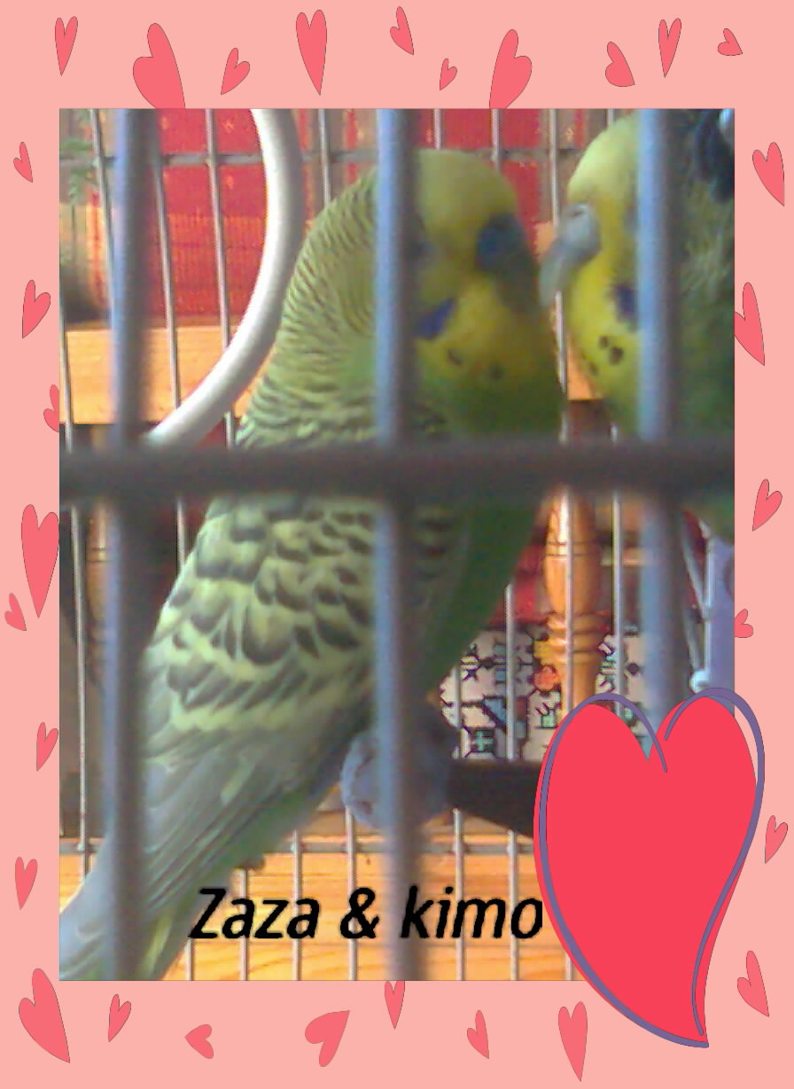 Zaza & Kimo Photo027